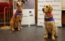 Un proyecto del Hospital 12 de Octubre demuestra los beneficios de la terapia con animales en pacientes con alcoholismo