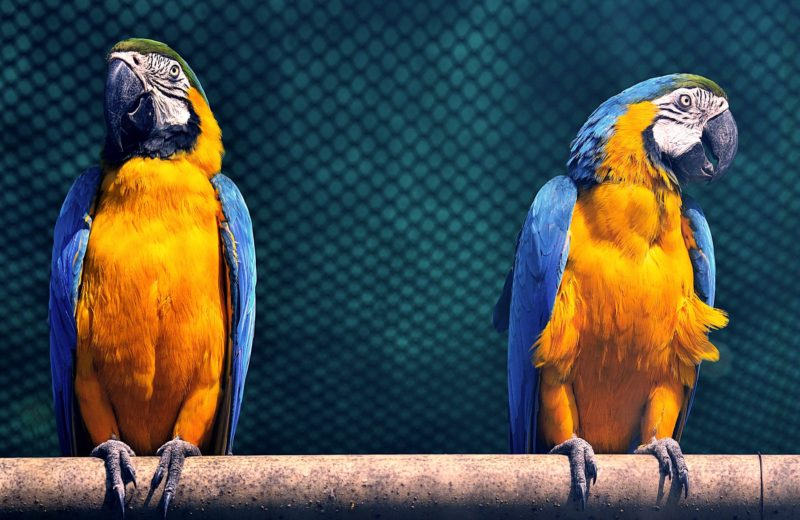 ¿Cómo reconocer una urgencia en mi pájaro y qué hacer?