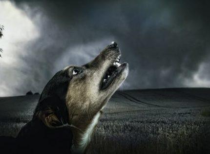 Por qué aúllan los perros?