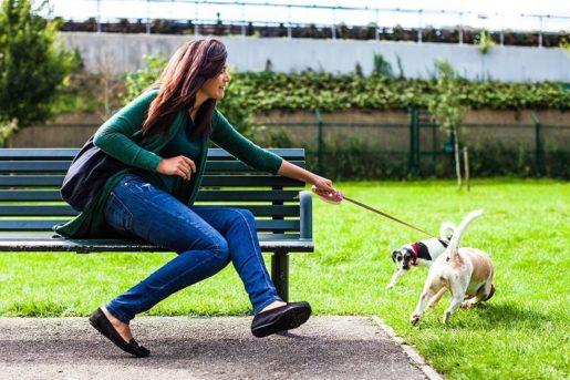 Perro en la ciudad tirando correa
