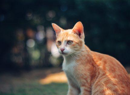 Como nos hablan los gatos – Comportamiento y su interpretación