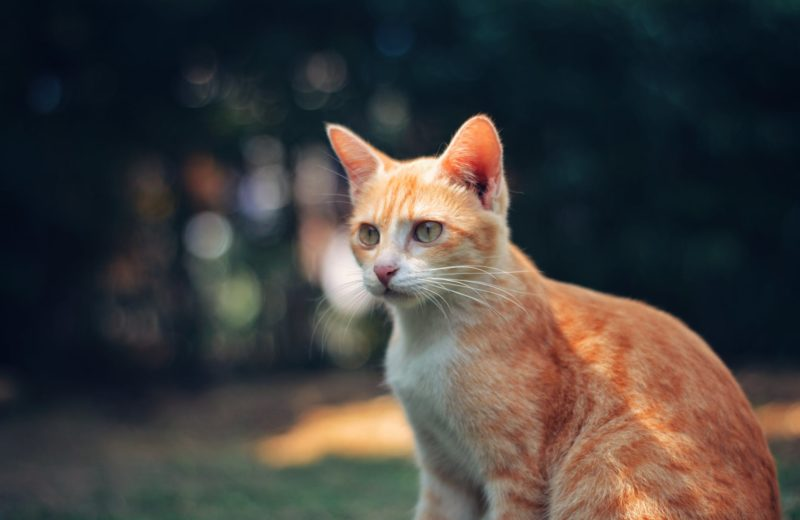 Postura gatos