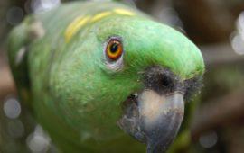¿Qué nutrientes necesita tu ave y para qué?