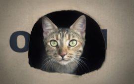 Perros y gatos que reciclan: cómo hacer juguetes con cartón viejo para ellos