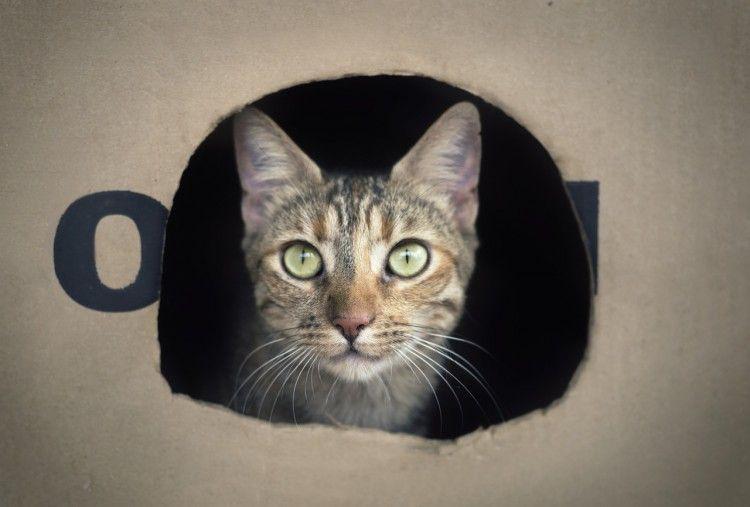 Gatos cajas