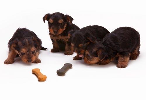 Huesos perros