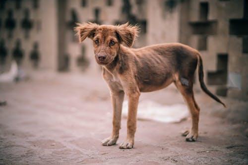 Inacción administrativa ante denuncias por maltrato animal y el delito de prevaricación