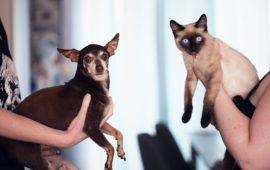Disfunción cognitiva en perros y gatos