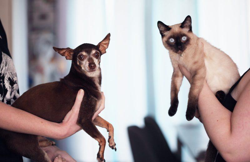 Mascotas viejitas