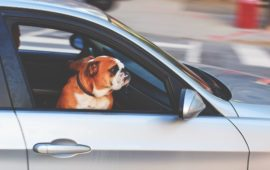 Los conductores españoles tenemos la mala praxis de circular con la mascota suelta en el coche