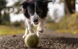 Esterilizar al perro y paseos dos veces al día, ¿debería ser obligatorio?