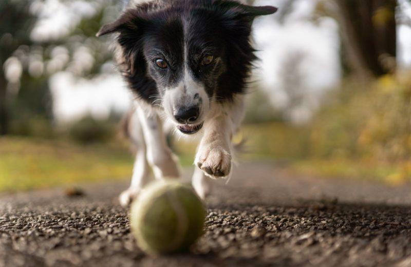 Paseos diarios perros