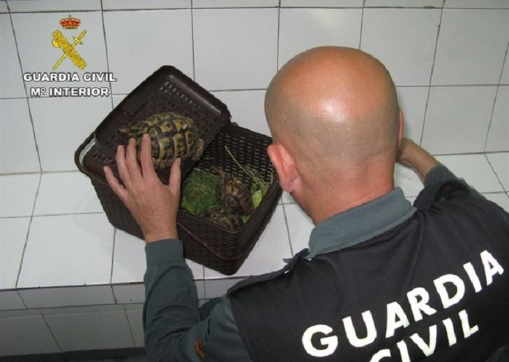 Tortugas protegidas