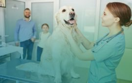 Editan una guía de enfermedades transmitidas por animales de compañía