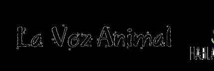 La Voz Animal, en busca de una familia