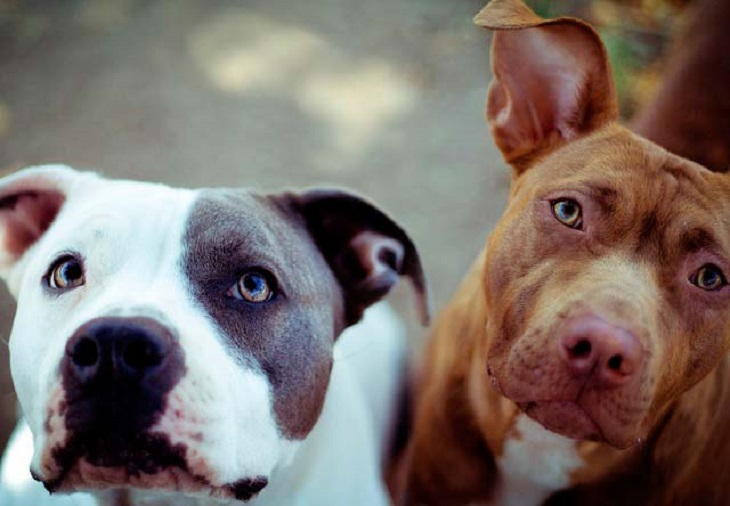 PACMA pide la derogación de normativas sobre animales peligrosos