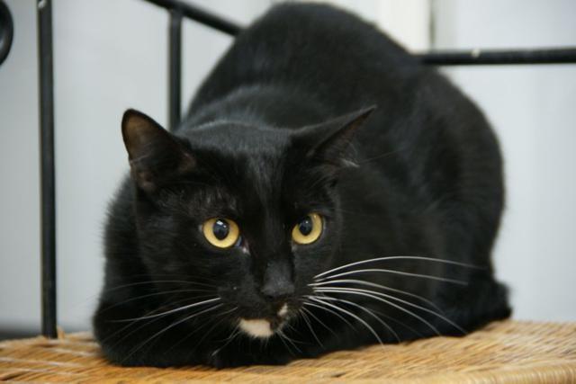 Los gatos se estresan si sus propietarios no acuden con ellos a la consulta veterinaria