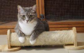 ¿Por qué tu gato araña los muebles?
