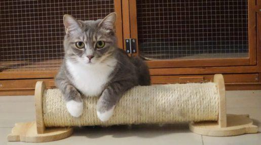 Arañar muebles - Gato con rascador
