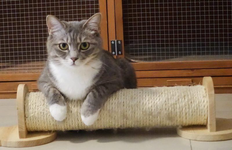 Gato con rascador