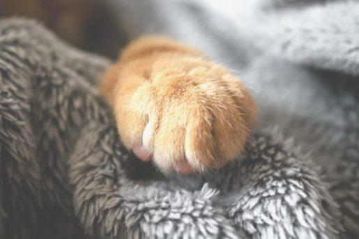 Arañar muebles - Pata de gato