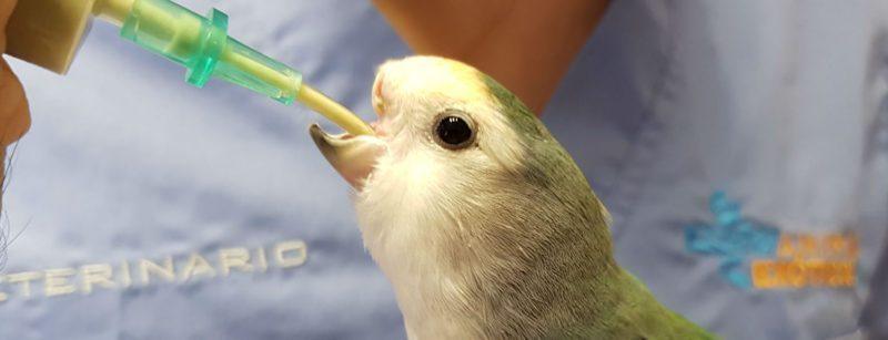 Medicación pájaros