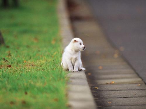 Bienestar animal - Perro en carretera