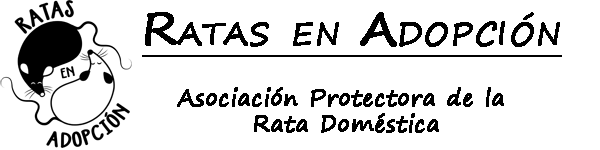 Ratas en adopción – la ong para adoptar «ratas domésticas»