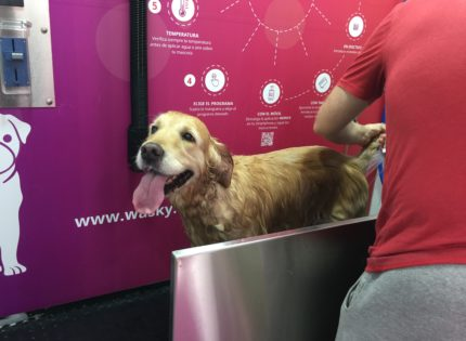 Lava tu perro gratis con Wasky en Alcalá de Henares los días 17,18 y 19 de mayo