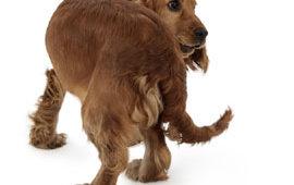 ¿Pasan los perros por la adolescencia?