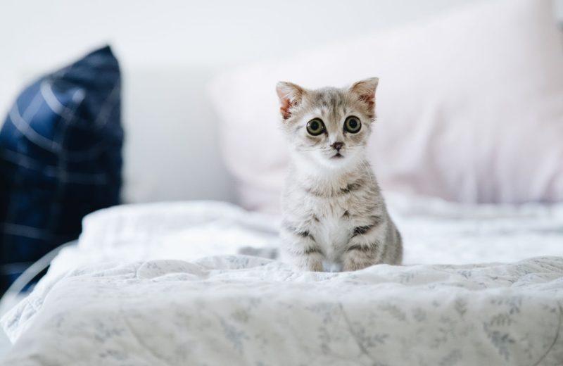 Gatito bebé pequeño