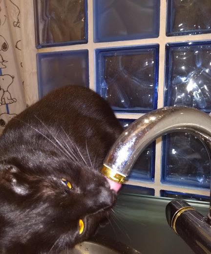 Gato bebiendo del grifo