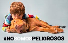 Por una nueva campaña para modificar la Ley de Perros Potencialmente Peligrosos