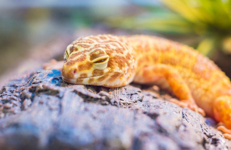 Animales exóticos: Consejos para el calor