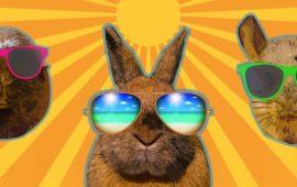 Golpe de calor en conejos, chinchillas y cobayas