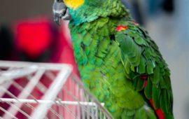 Cómo actuar ante una urgencia con un pájaro