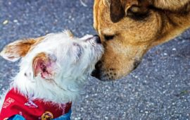 El Defensor del Pueblo pide un protocolo para infractores recurrentes en tenencia de mascotas que generan molestias a los vecinos