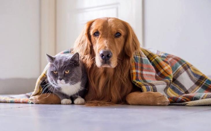 Nuevas medidas de Protección y Bienestar de Animales en Sevilla