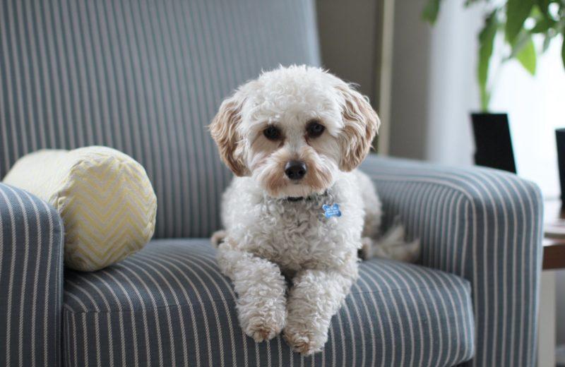 Mascotas pidonas: ¿cómo hacer que el perro deje de pedir comida de la mesa?