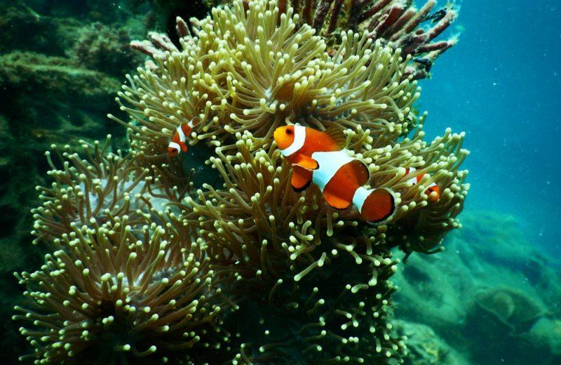 El color de los peces, ¿para qué les sirve tanta variedad?