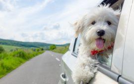 Viajar con tu mascota. Recomendaciones a tener en cuenta.
