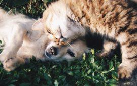 Tres importantes razones por las que deberías esterilizar a tu mascota