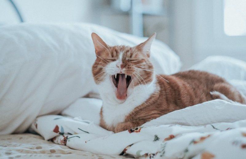 ¿Cuál es el gasto medio diario en mascotas?
