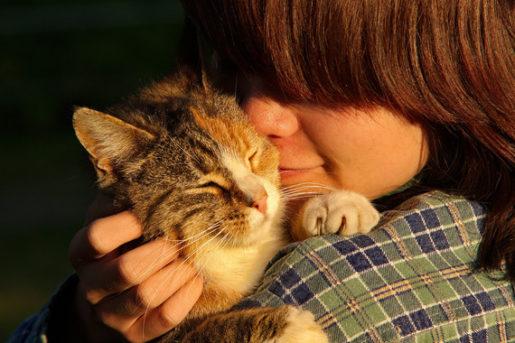 Gato con dueño