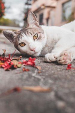 Gatos en otoño