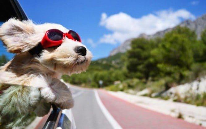 Pautas para volver a la rutina tras las vacaciones con tu perro