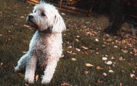 Llega el otoño, ¿cómo afecta a los nuestros perros?