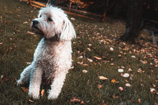 Perro en otoño