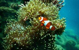 «Buscando a Nemo», pero no «comprándolo»