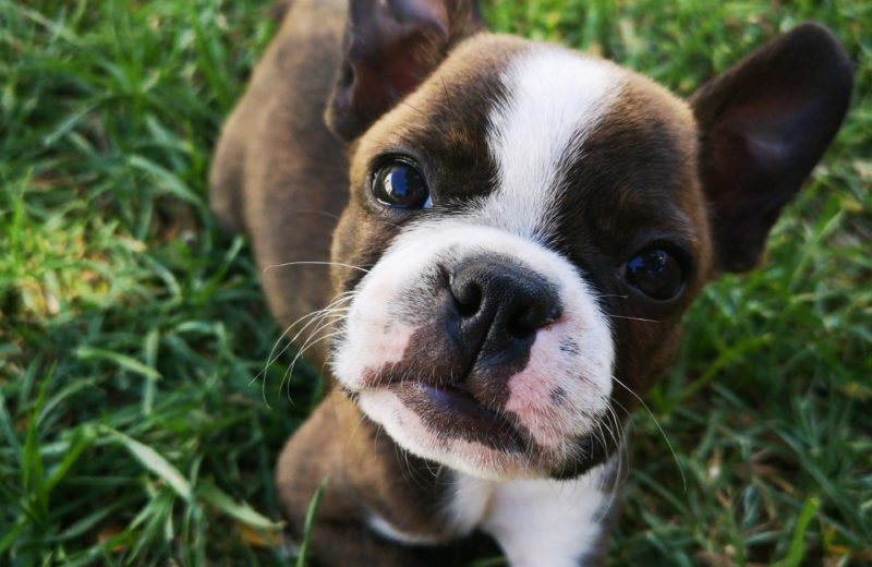 ¿Cuándo acudir a un servicio especialista en dermatología veterinaria?